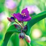 Зеленый и фиолетовый в интерьере